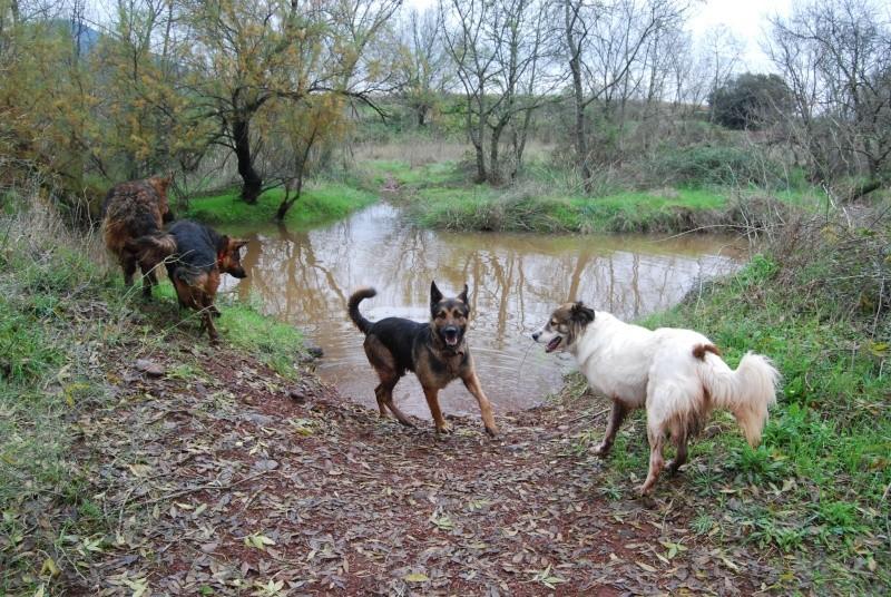 La vie des chiens au sein de l'association, c'est aussi ça... Dsc_0512