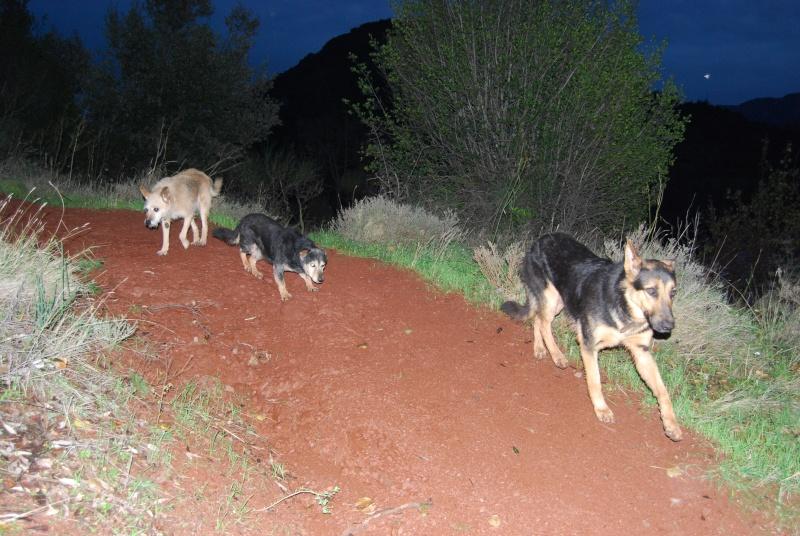 La vie des chiens au sein de l'association, c'est aussi ça... Dsc_0513