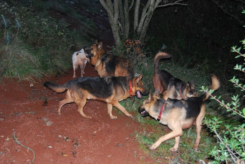 La vie des chiens au sein de l'association, c'est aussi ça... Dsc_0514
