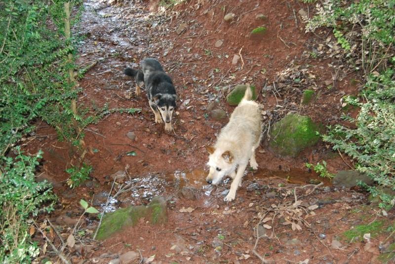 La vie des chiens au sein de l'association, c'est aussi ça... Dsc_0516