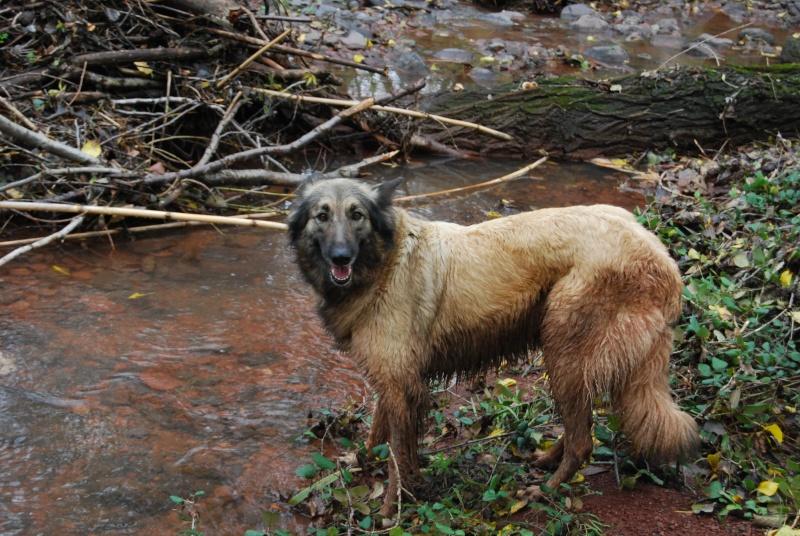 La vie des chiens au sein de l'association, c'est aussi ça... Dsc_0517