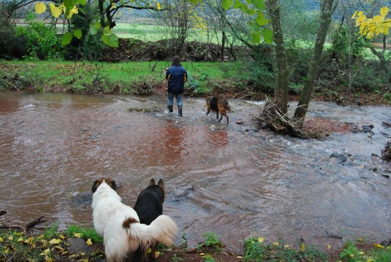 La vie des chiens au sein de l'association, c'est aussi ça... Dsc_0519