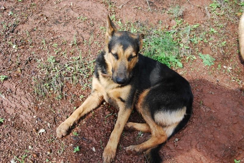 La vie des chiens au sein de l'association, c'est aussi ça... Dsc_0520