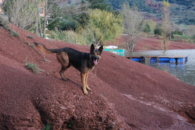 La vie des chiens au sein de l'association, c'est aussi ça... Dsc_0614