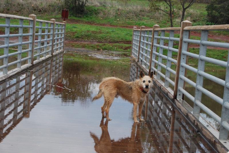 La vie des chiens au sein de l'association, c'est aussi ça... Dsc_0615