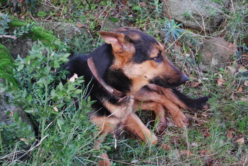 La vie des chiens au sein de l'association, c'est aussi ça... Dsc_0617