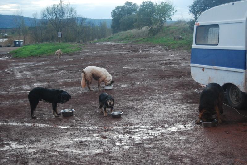 La vie des chiens au sein de l'association, c'est aussi ça... Dsc_0618