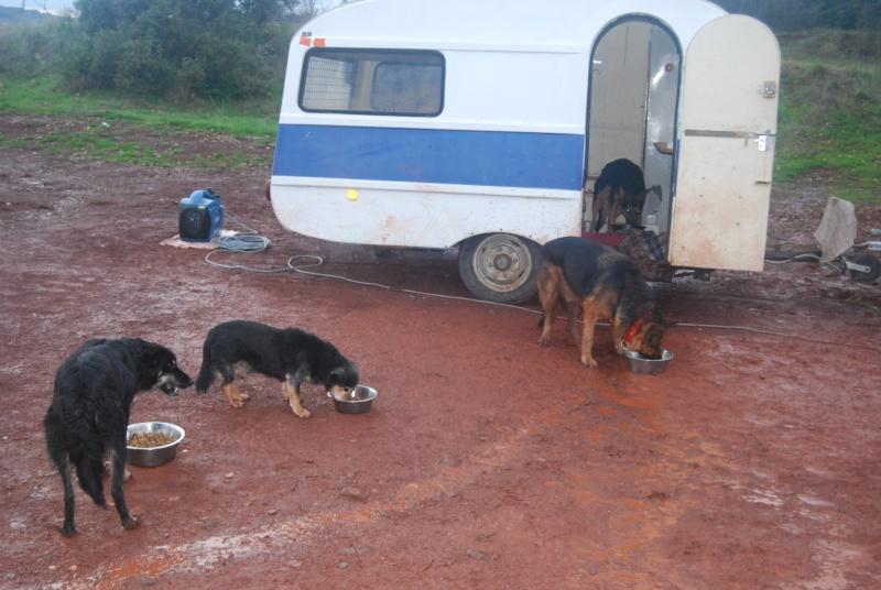 La vie des chiens au sein de l'association, c'est aussi ça... Dsc_0619