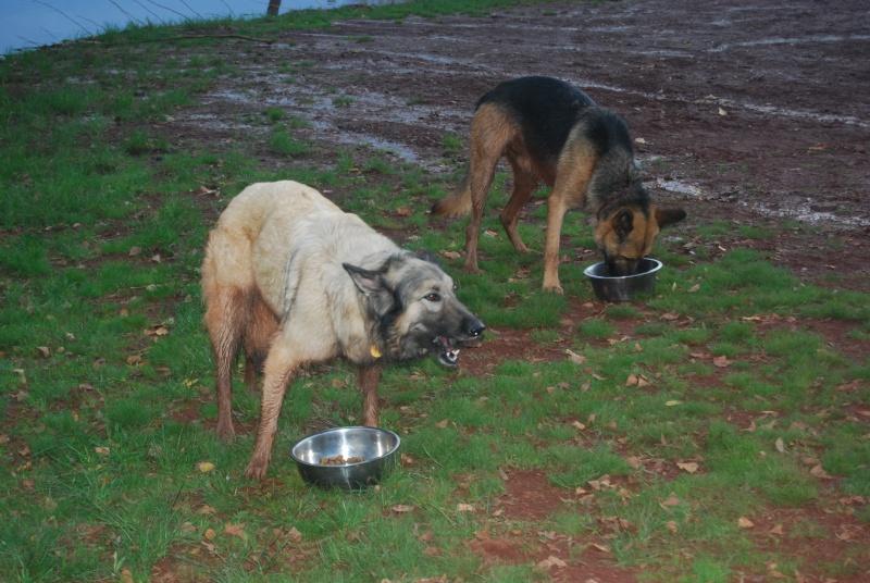 La vie des chiens au sein de l'association, c'est aussi ça... Dsc_0620