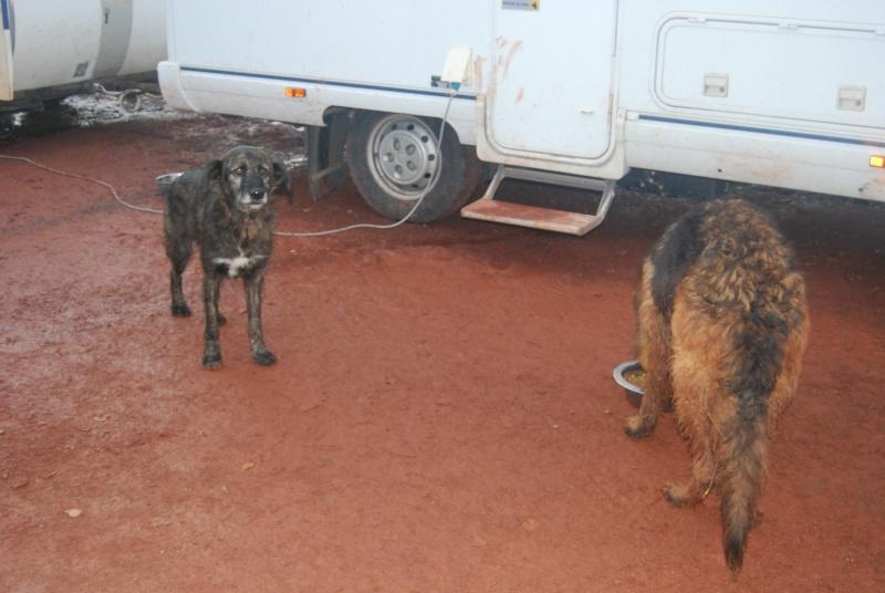 La vie des chiens au sein de l'association, c'est aussi ça... Dsc_0621