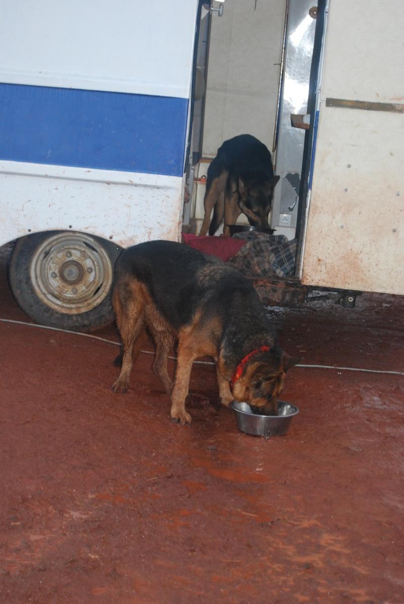 La vie des chiens au sein de l'association, c'est aussi ça... Dsc_0622