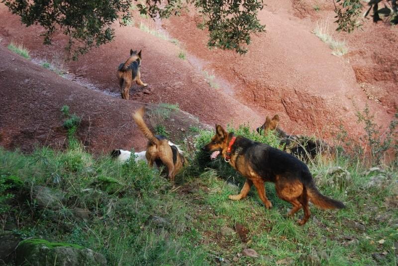 La vie des chiens au sein de l'association, c'est aussi ça... Dsc_0624