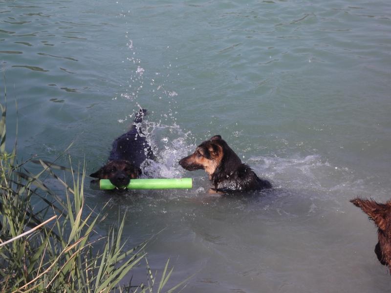 La vie des chiens au sein de l'association, c'est aussi ça... Dscf4229