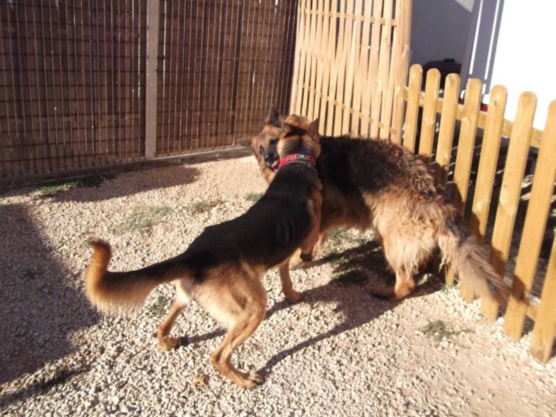 La vie des chiens au sein de l'association, c'est aussi ça... Dscf4230
