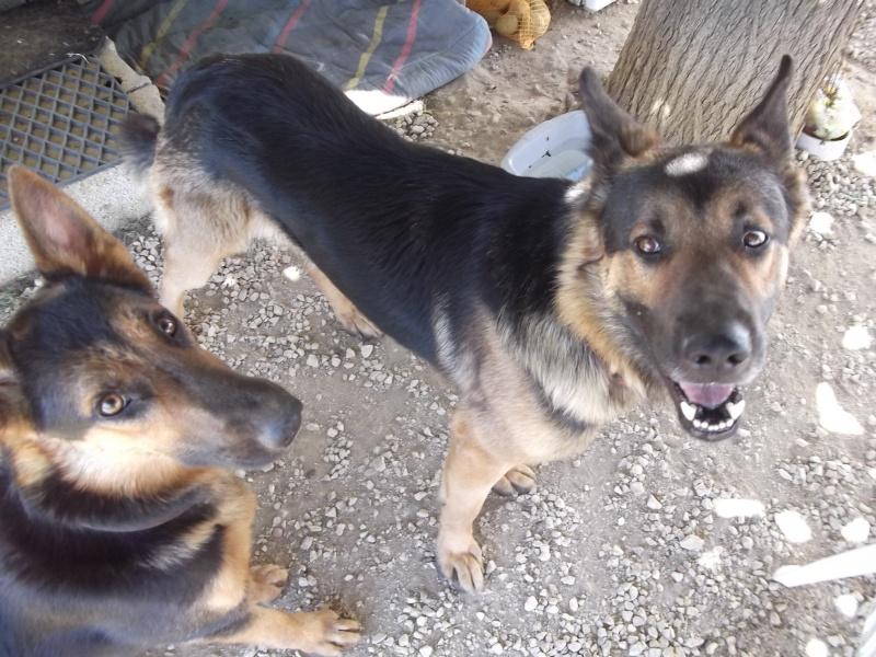 La vie des chiens au sein de l'association, c'est aussi ça... Dscf4231