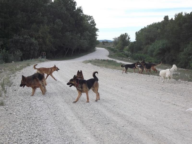 La vie des chiens au sein de l'association, c'est aussi ça... Dscf4232