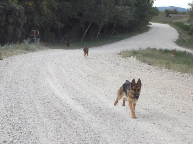 La vie des chiens au sein de l'association, c'est aussi ça... Dscf4233