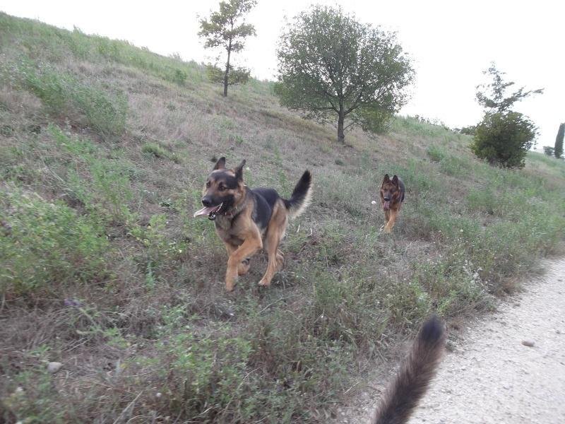 La vie des chiens au sein de l'association, c'est aussi ça... Dscf4234