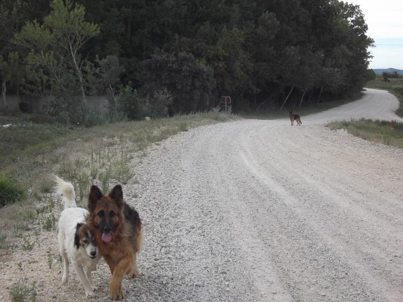 La vie des chiens au sein de l'association, c'est aussi ça... Dscf4235