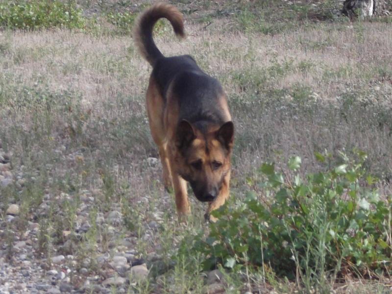La vie des chiens au sein de l'association, c'est aussi ça... Dscf4237
