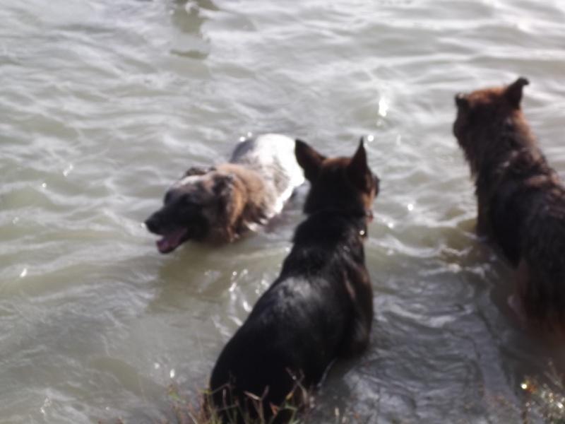 La vie des chiens au sein de l'association, c'est aussi ça... Dscf4317