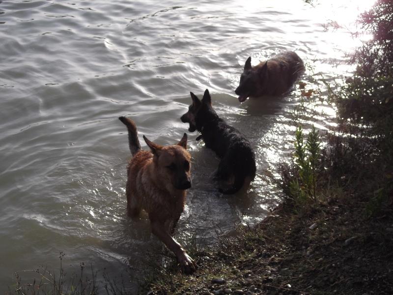 La vie des chiens au sein de l'association, c'est aussi ça... Dscf4416