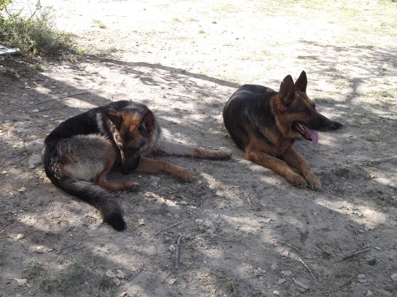 La vie des chiens au sein de l'association, c'est aussi ça... Famill10