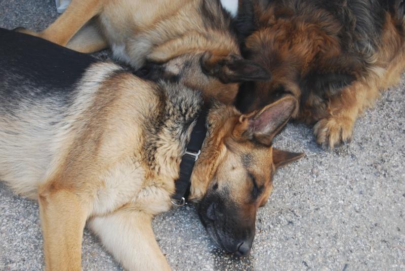 La vie des chiens au sein de l'association, c'est aussi ça... Loulou26