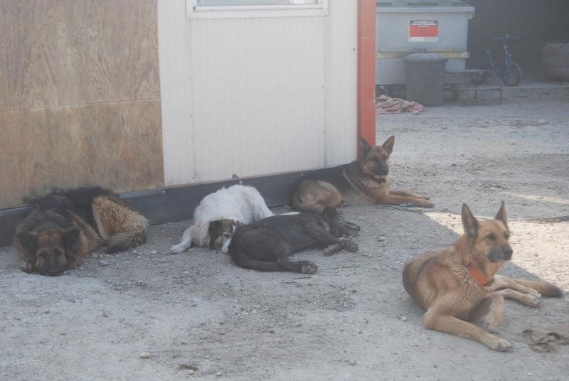 La vie des chiens au sein de l'association, c'est aussi ça... Loulou27
