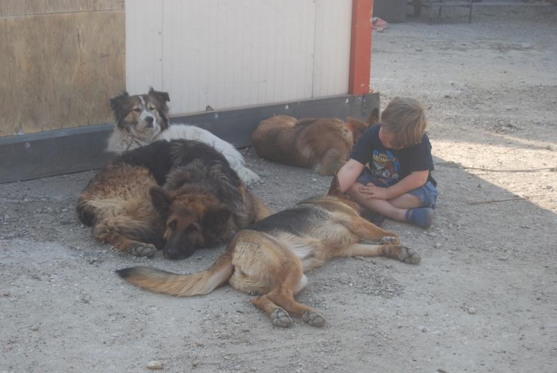 La vie des chiens au sein de l'association, c'est aussi ça... Loulou28