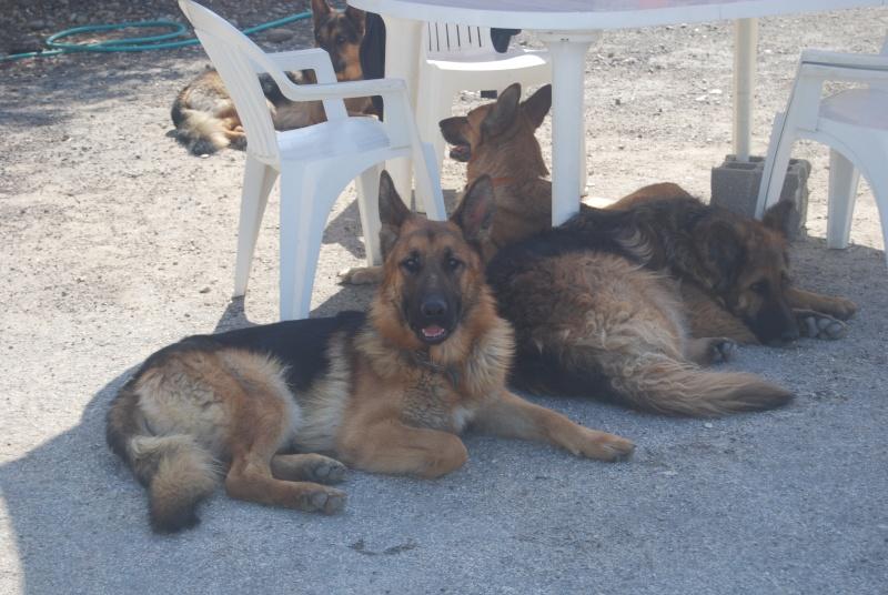 La vie des chiens au sein de l'association, c'est aussi ça... Loulou29