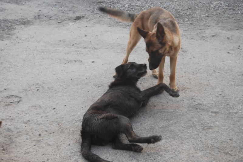 La vie des chiens au sein de l'association, c'est aussi ça... Loulou31