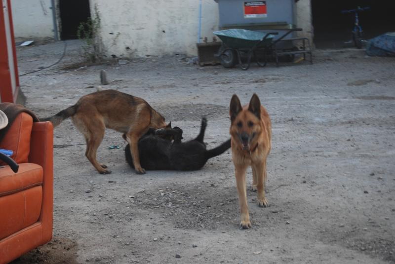 La vie des chiens au sein de l'association, c'est aussi ça... Loulou32