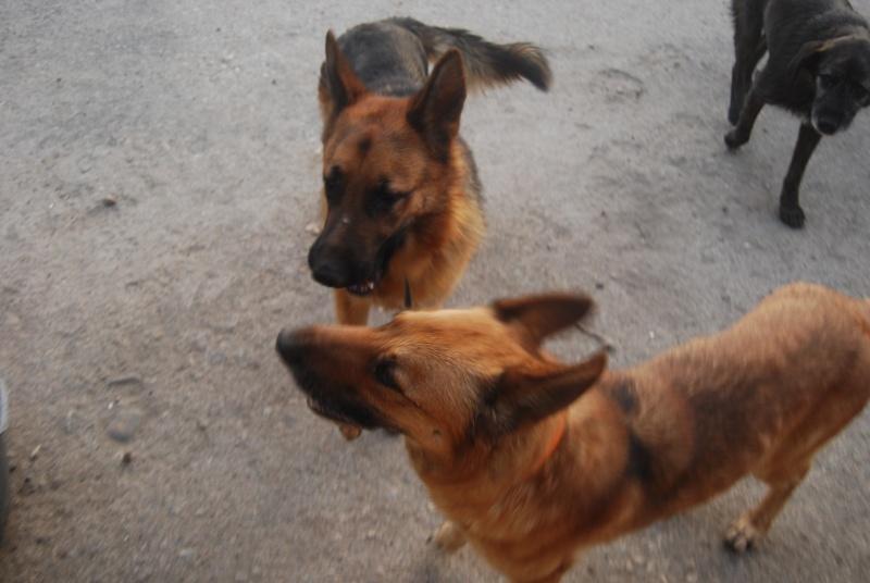 La vie des chiens au sein de l'association, c'est aussi ça... Loulou33