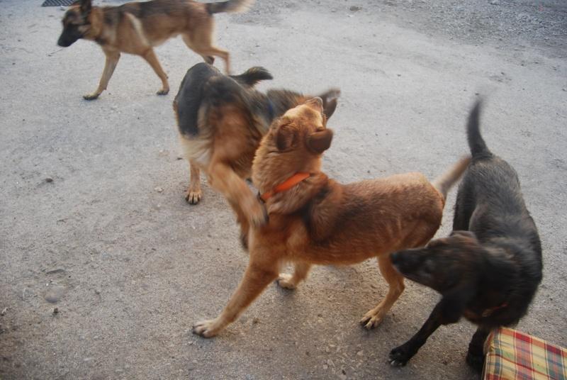 La vie des chiens au sein de l'association, c'est aussi ça... Loulou34