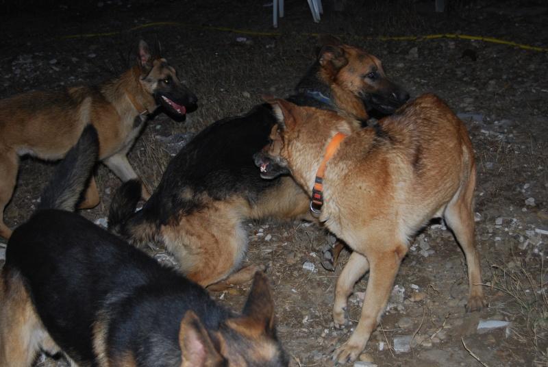 La vie des chiens au sein de l'association, c'est aussi ça... Loulou35