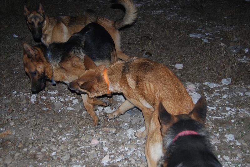 La vie des chiens au sein de l'association, c'est aussi ça... Loulou36