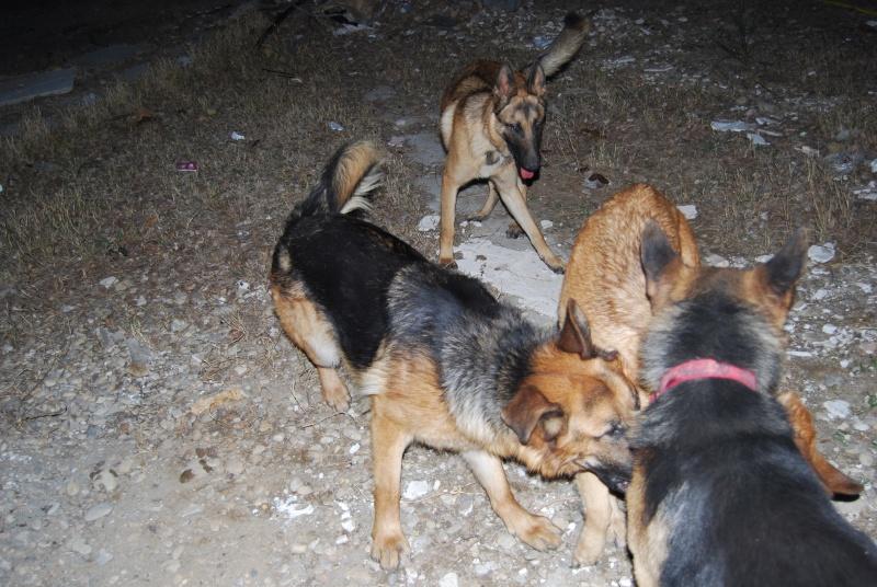 La vie des chiens au sein de l'association, c'est aussi ça... Loulou37