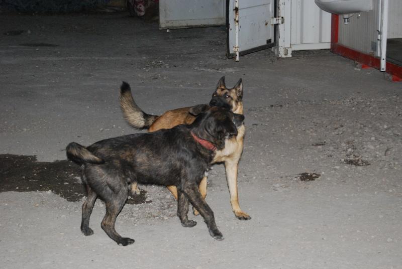 La vie des chiens au sein de l'association, c'est aussi ça... Loulou38