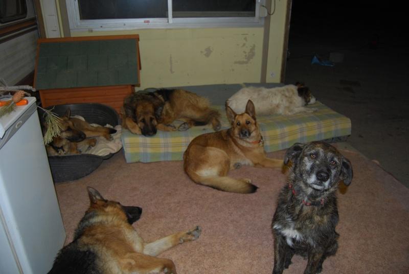 La vie des chiens au sein de l'association, c'est aussi ça... Loulou39