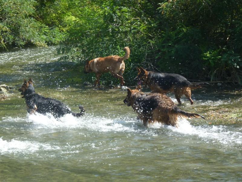 La vie des chiens au sein de l'association, c'est aussi ça... P1050513