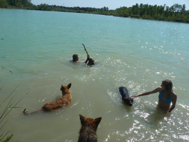 La vie des chiens au sein de l'association, c'est aussi ça... P1050514