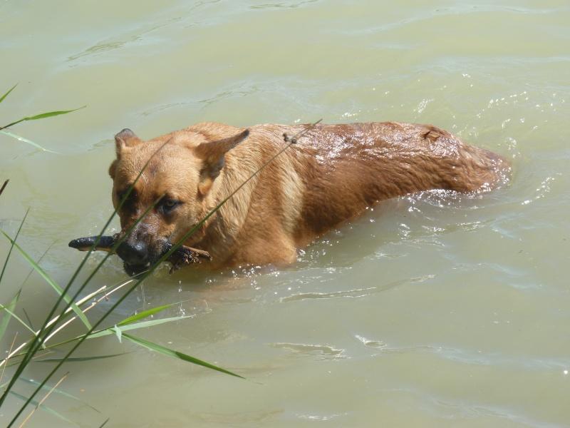 La vie des chiens au sein de l'association, c'est aussi ça... P1050515