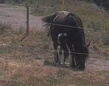 Sortie à Rosans au Domaine Les Montarines centre 4x4 et Equestre 2011-010