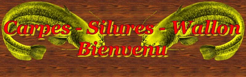 Carpes-Silures-Wallon