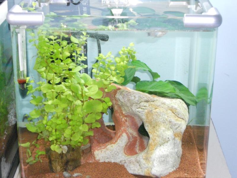 Mes 2 aquarium  Dscn0410