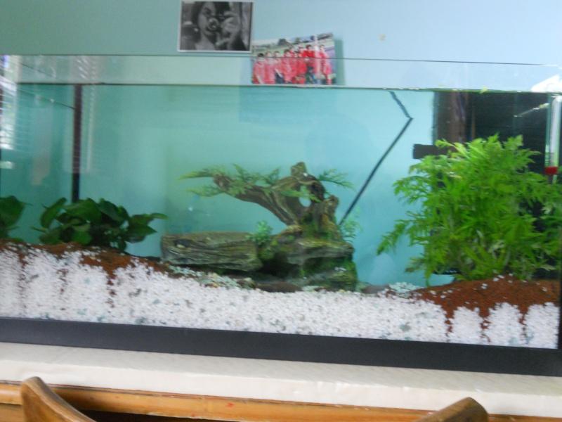 Mes 2 aquarium  Dscn0412