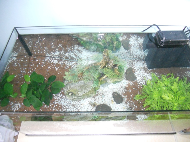 Mes 2 aquarium  Dscn0413