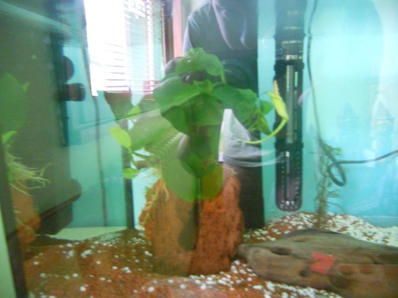 Mes 2 aquarium  Dscn0513