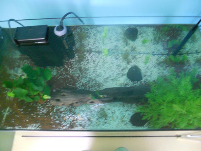 Mes 2 aquarium  Dscn0515